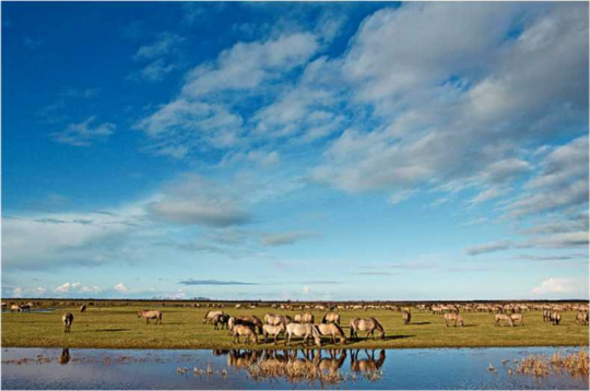"Photograph illustrating for ""Recall of the wild"" depicting Flevoland, an attempt to 'rewild' a 15,000-acre park in the Netherlands. Photo courtesy Ian Teh"